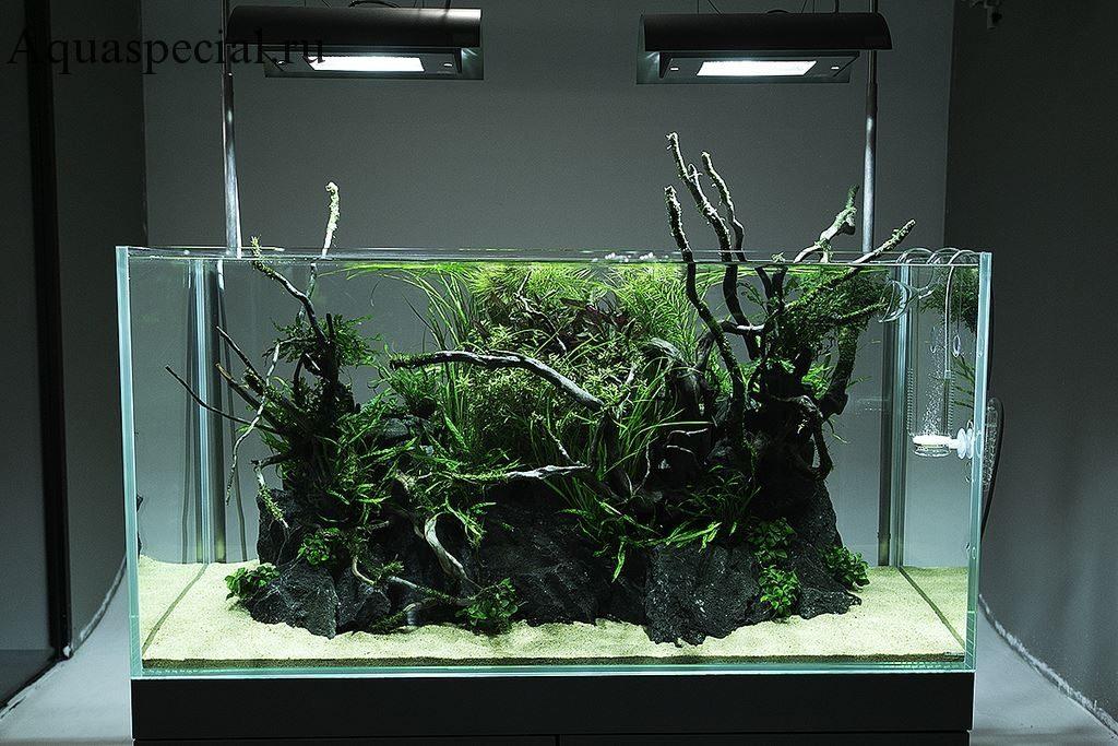 Мизубе стиль акваскейпа. Дизайн аквариума Амано