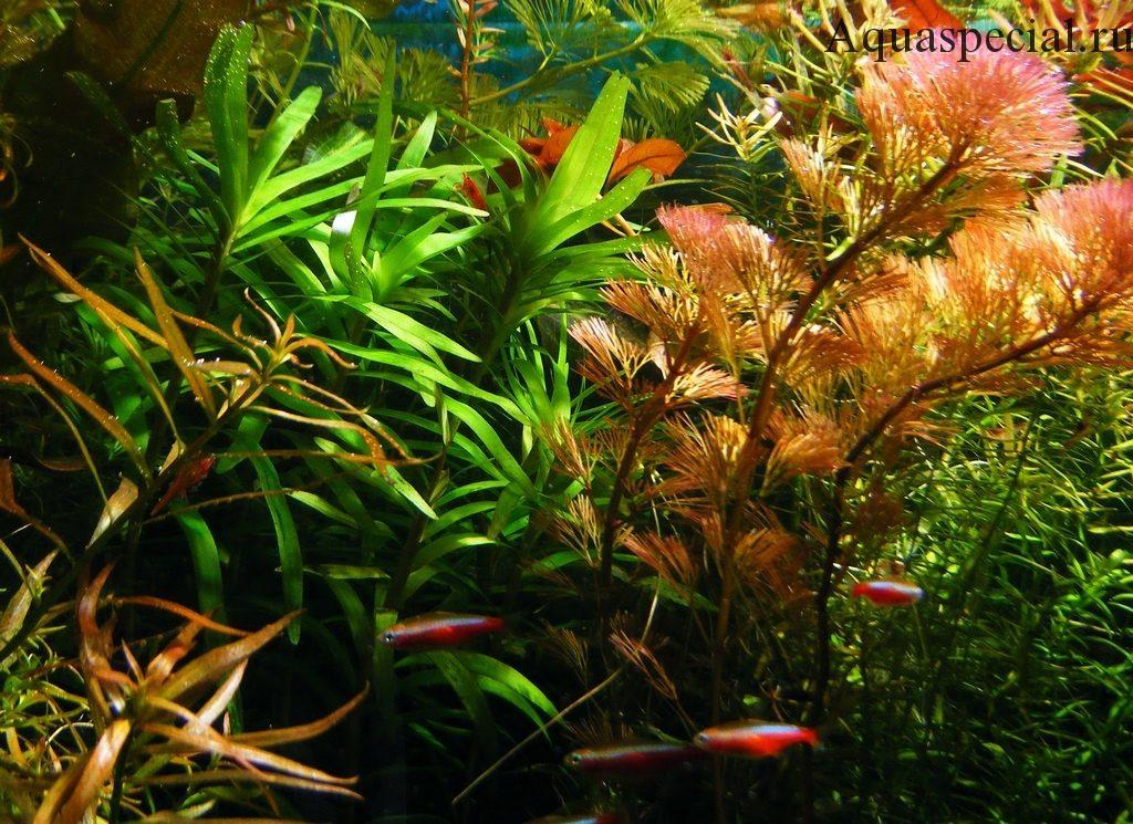 Красивое фото аквариумные растения. Акваспешиал