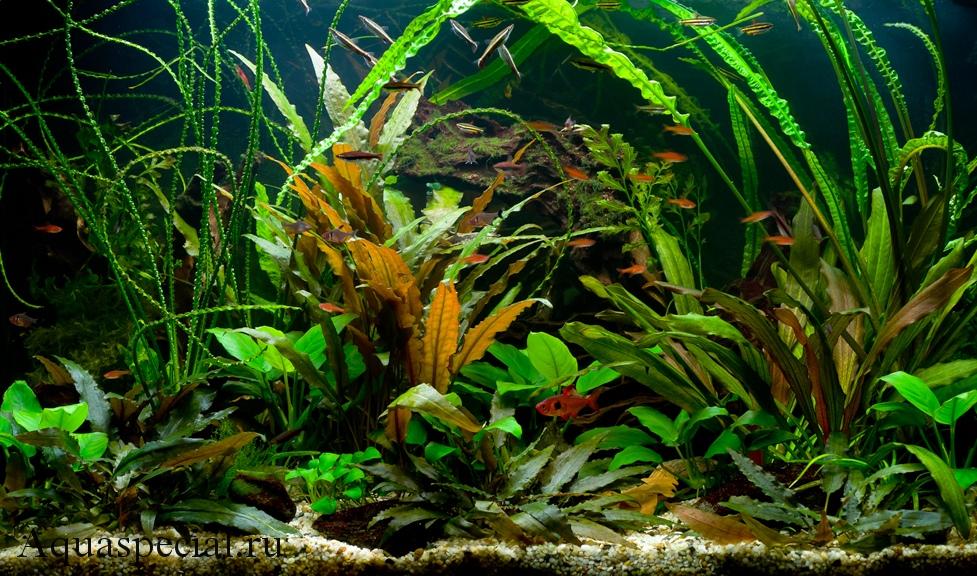 Аквариум травник фото с описанием, содержание, как посадить растение