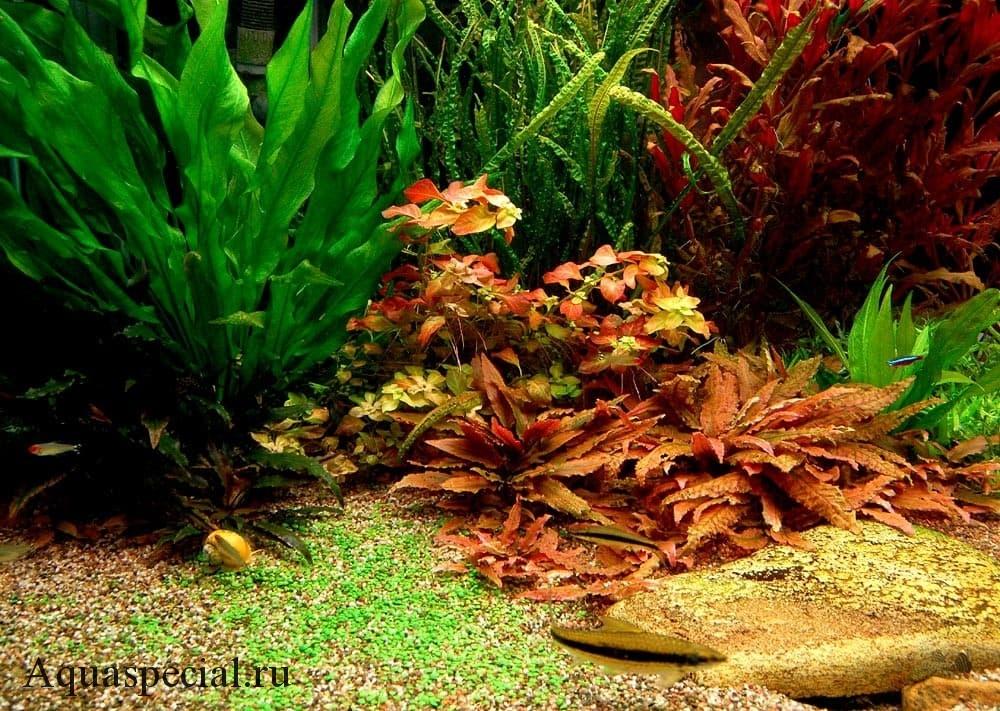 Красивый аквариум травник фото