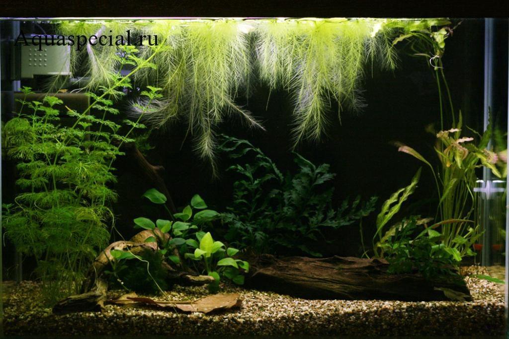 Дизайн аквариума фото. Красивый аквариум своими руками