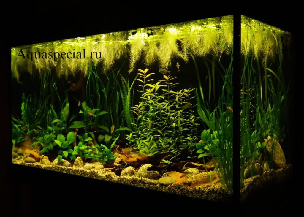 Красивое фото аквариума с растениями. Плавающие аквариумные растения