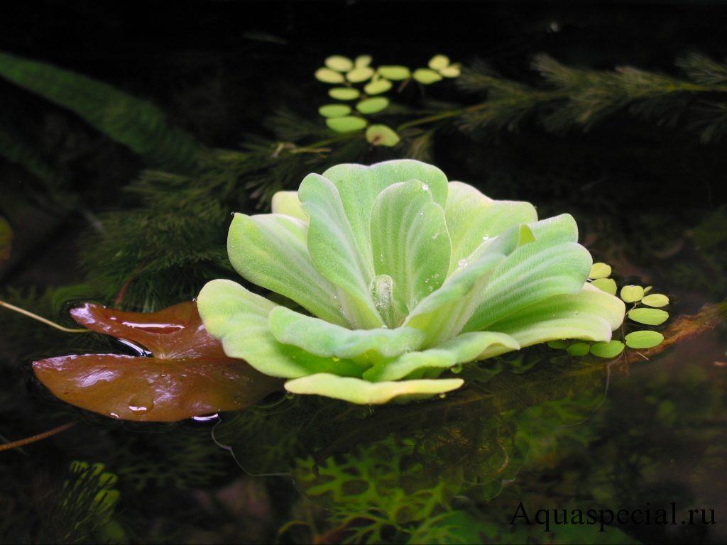 Фотогалерея красивых картинок с аквариумами