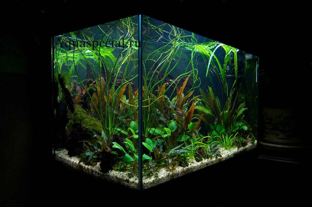 Дизайн и оформление аквариума травника фото