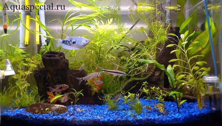 Совместимость рыбок в аквариуме, мирные рыбки