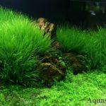 Бликса японика акваскейп. Оформление аквариума травника. Дизайн аквариума красивое фото