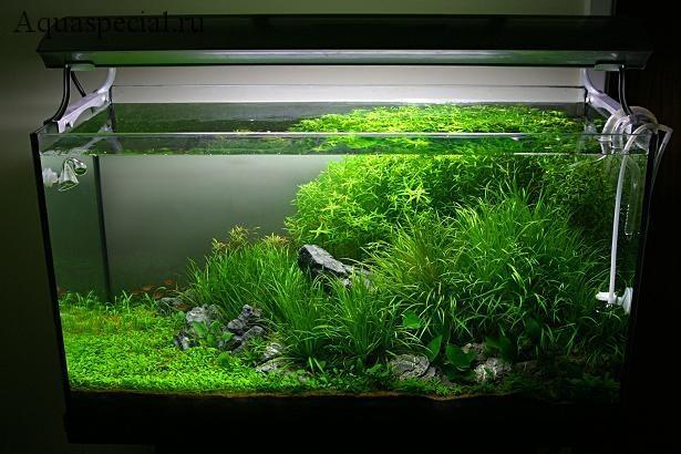 Аквариум в стиле Амано. Оформление и дизайн аквариума. Акваскейп красивое фото