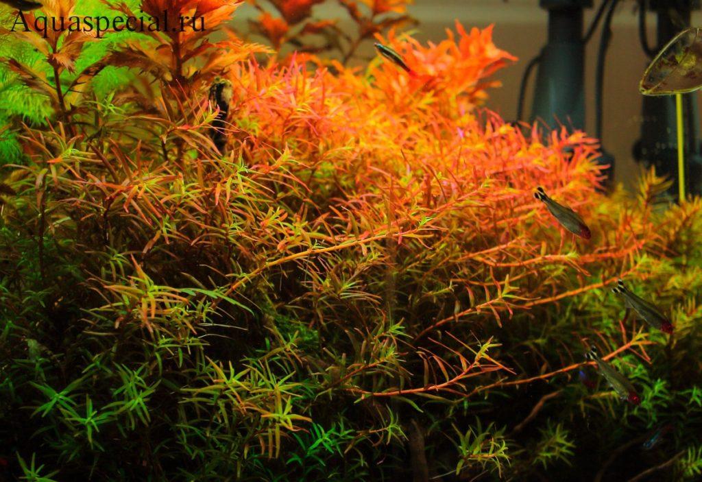 Описание аквариумных растений с фото. Красивые аквариумные растения содержание