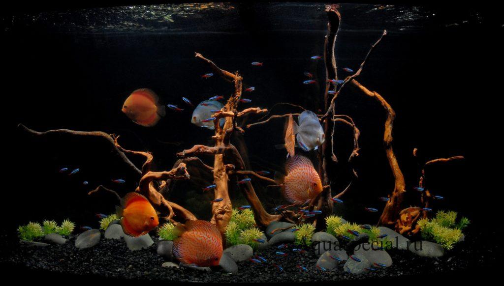 Красивый аквариум фото. Дизайн аквариума. Аквариум с рыбками. Оформление аквариума с корягой.