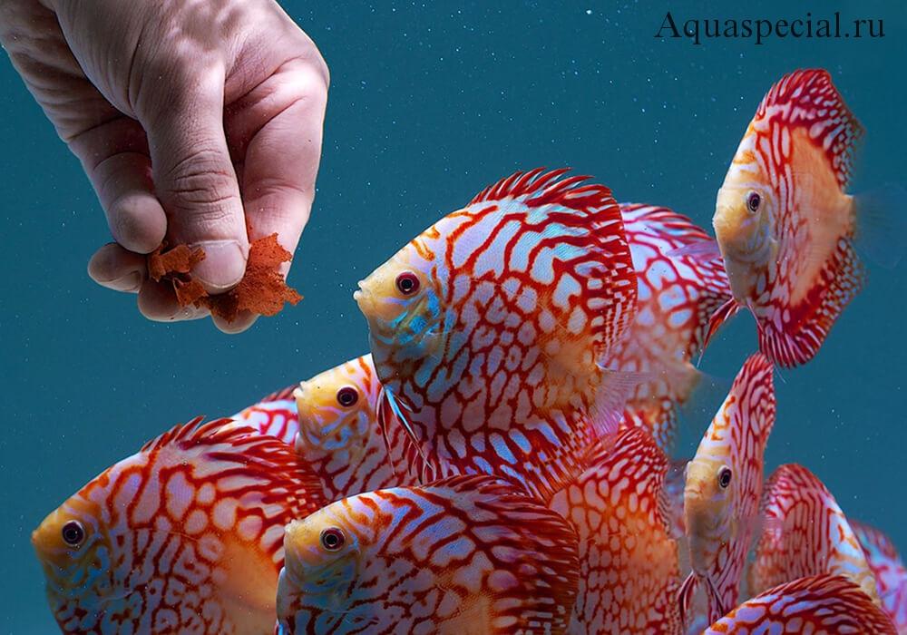 Чем кормить аквариумных рыбок. Содержание рыб красивых рыб в аквариуме