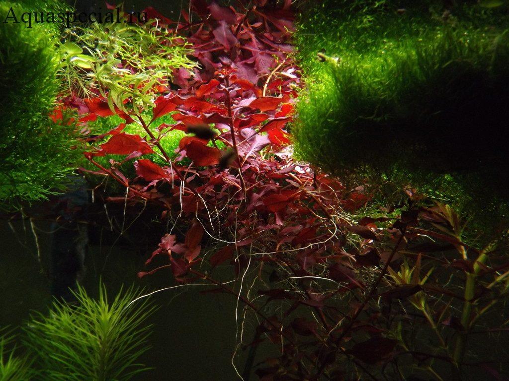 Красивые аквариумные растения в аквариуме