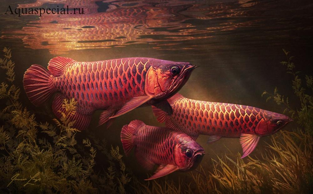 Рыба дракон