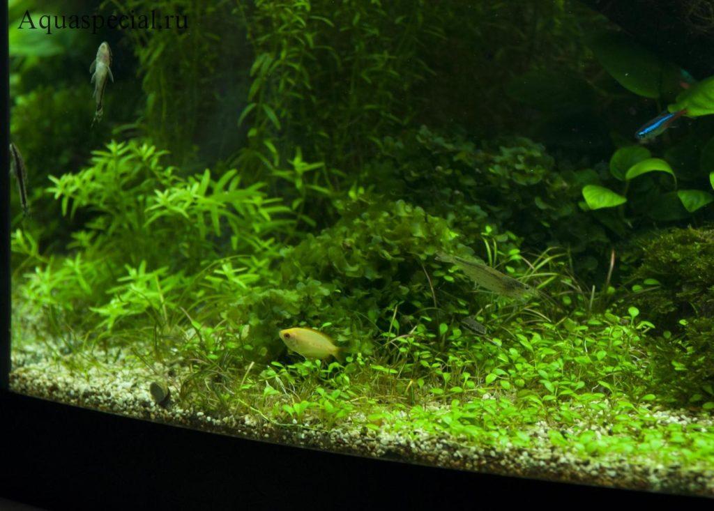 Аквариум с креветками