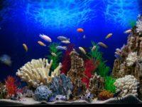 Оформление аквариума в стиле Псевдоморе
