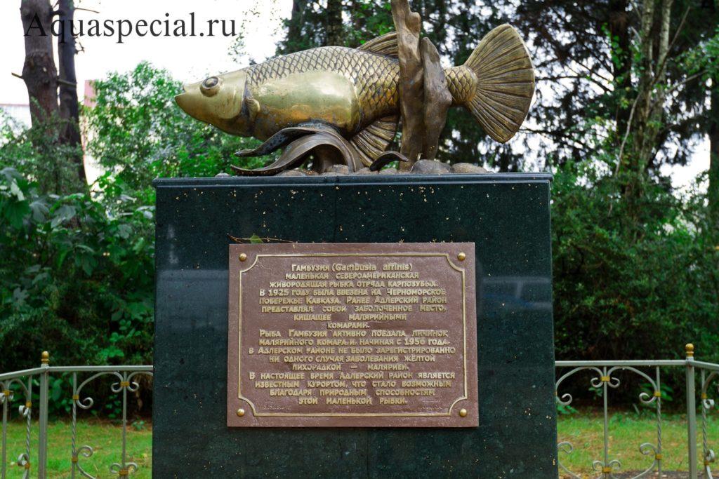 Памятник гамбузии в Адлере Сочи