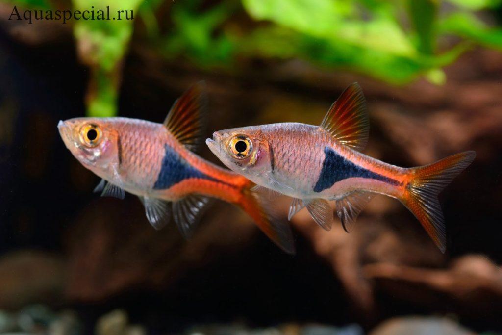 Необычные рыбки в аквариуме в аквариуме