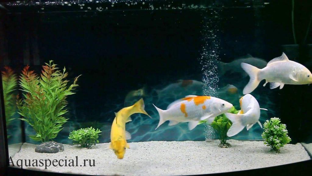Необычные рыбы в аквариуме