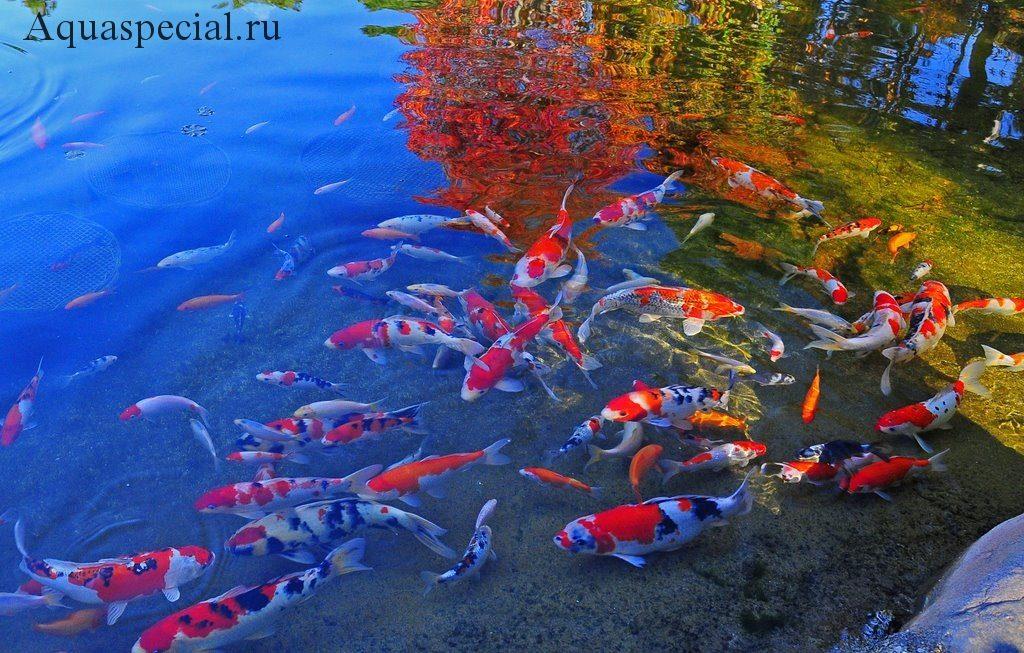 Искусственный пруд для рыб