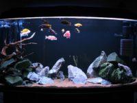 Как обустроить цихлидник: оформление аквариума своими руками