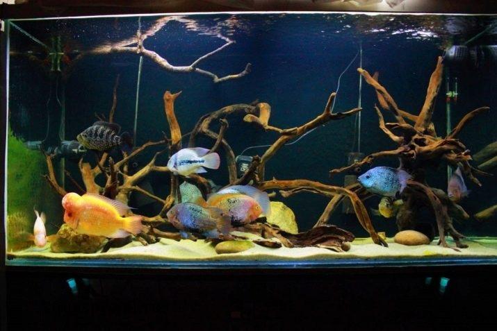 Как обустроить аквариум с цихлидами. Дизайн аквариума