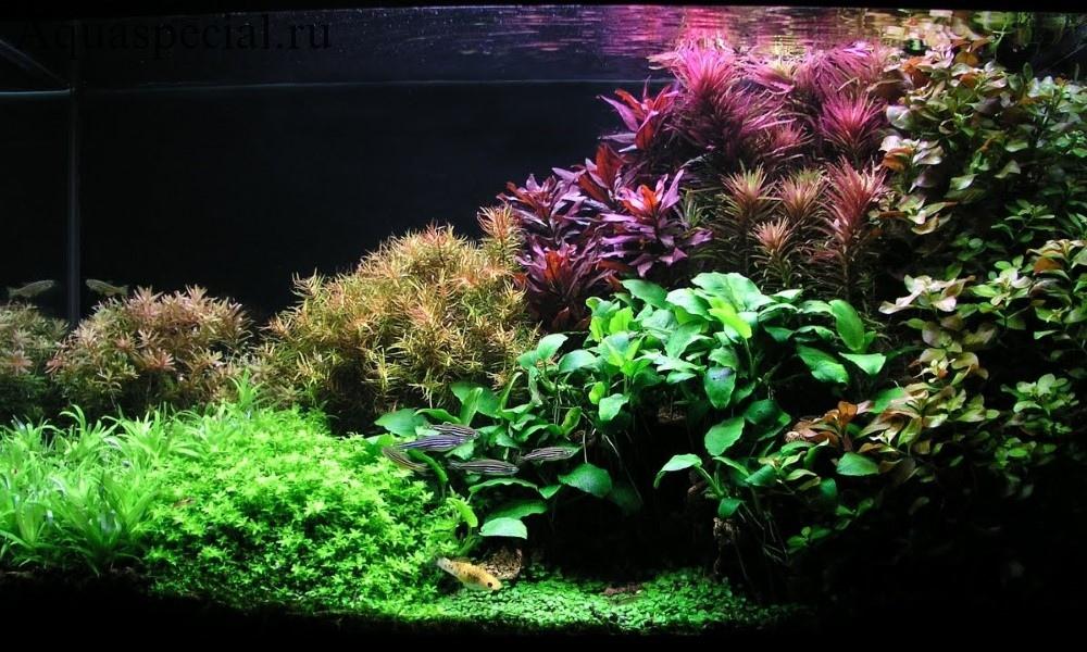 Голландский аквариум. Голландский акваскейп