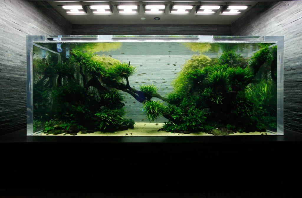 Природный аквариум Амано. акваскейп
