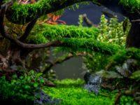 Что такое акваскейп, принципы создания, рекомендации по уходу