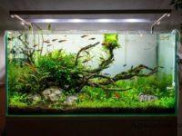 В каких случаях нужен перезапуск аквариума и как его правильно провести?