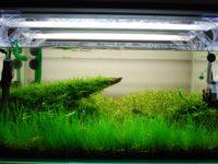 Лампа для аквариума: Виды ламп, спектр, какую выбрать?