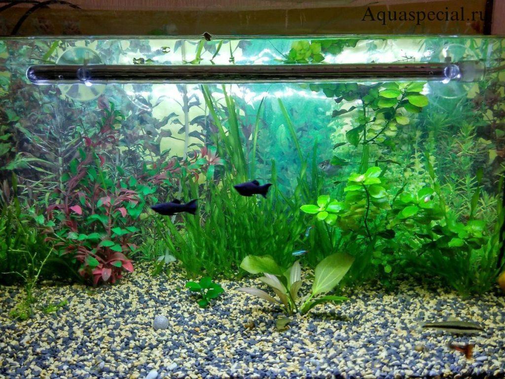 Погружной светильник для аквариума