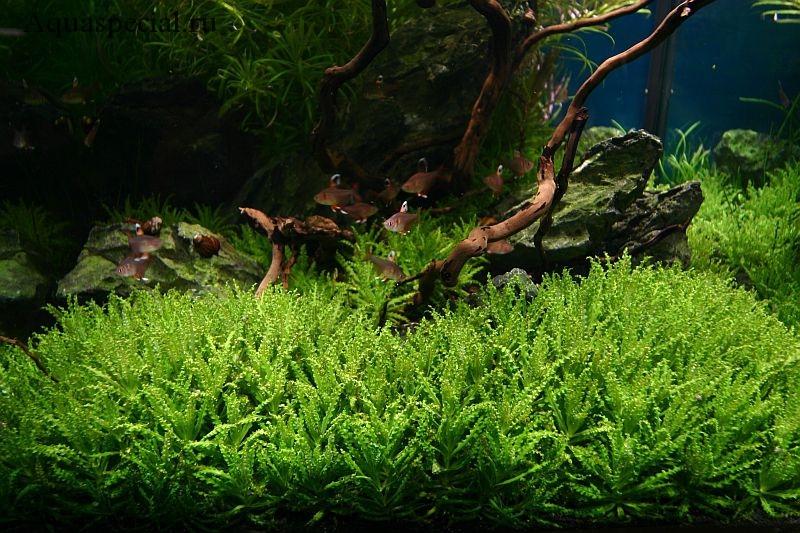 Красивый аквариум с растениями. Аквариум травник