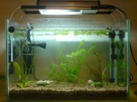 Компрессор для аквариума: виды, критерии выбора, установка оборудования
