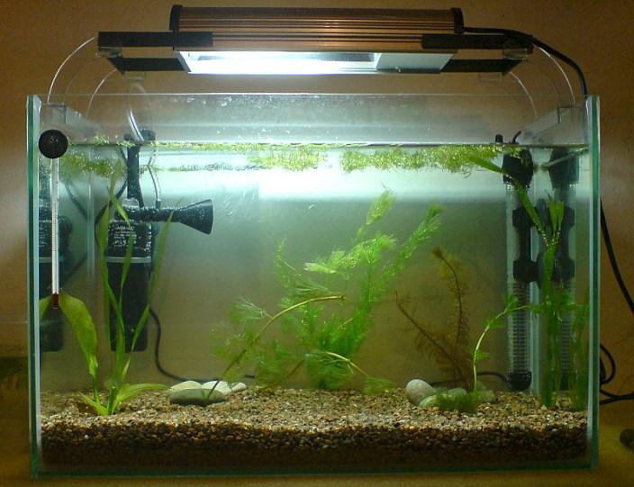 Компрессор для аквариума. Аэрация в аквариуме