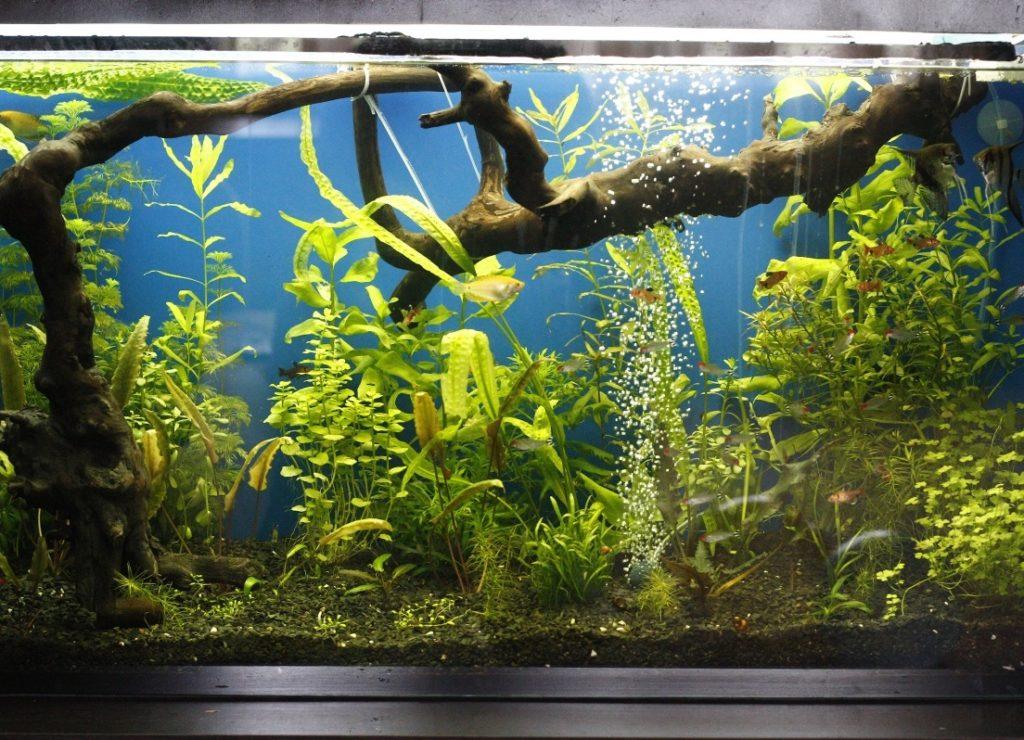 Аэратор аквариума