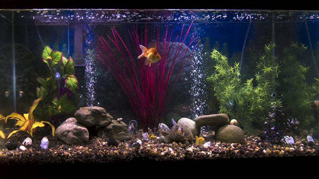 Аэрация у аквариуме