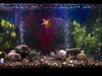 Нужна ли аэрация в аквариуме, способы подачи кислорода, влияние аэрации на аквариум