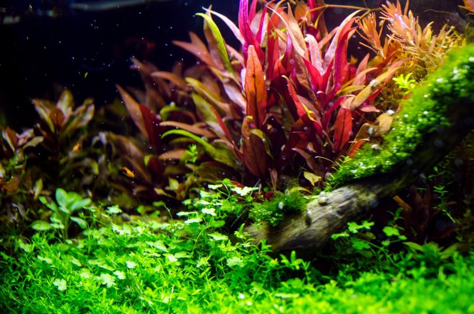 Красивые аквариумные растения