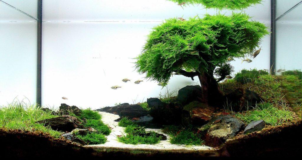 Акваскейпинг. Рождественский мох на коряге