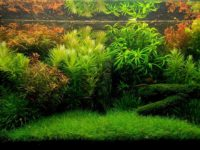 Осмос для аквариума: для каких аквариумов нужен, установка