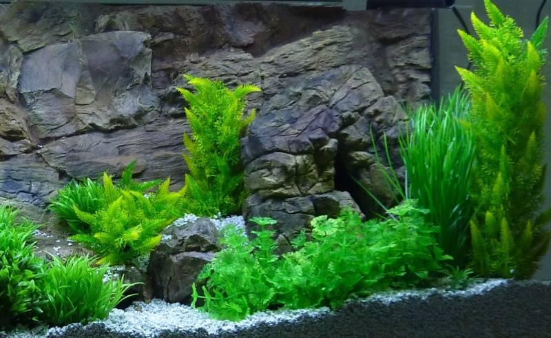 Искусственные растения в аквариуме фото